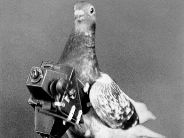 "Porumbei voiajori, porumbei militari, porumbei ""spioni"" – un articol interesant (nedescăcabil) de lawww.omofon.com."